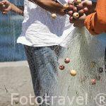Pescadores en la zona de Ras El Tin. Ciudad de ALEJANDRIA. Egipto