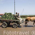 Carro con sandias. Calle del 26 de Julio junto al mar y el Puerto Este. Ciudad de ALEJANDRIA. Egipto