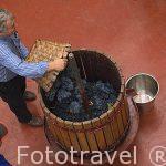 Llenado de un barril con uvas para posterior prensado en una demonstración. Bodega de Blas Serrano. FUENTELCESPED. Burgos. Castilla y Leon. España