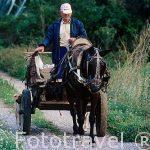 El Sr. Vicente Mancho Rodrigo sobre su carro, su caballo y sus perros de caza. Cerca del pueblo de CHULILLA. Valencia. Comunidad Valenciana. España (M.R.043)