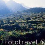 Paisaje montañoso en la Sierra de Tejo. Cerca a SOT DE CHERA. Valencia. Comunidad Valenciana