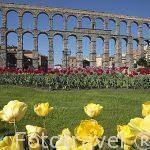Acueducto romano de Segovia y primer plano con flores
