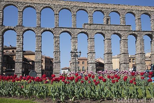 El acueducto de Segovia y su jardín de Amapolas en 1er plano
