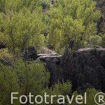 Paisaje y escaleras en el bosque. Segovia. Castilla y León.