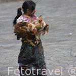 Chica con sus gallinas. Pueblo de SANTIAGO DE ATITLAN. Departamento de Sololá. Guatemala. Centroamerica