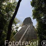 Templo V. Complejo maya de TIKAL. Departamento de Peten. Guatemala. Centroamerica
