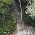 Senderos señalizados. Complejo maya de TIKAL. Departamento de Peten. Guatemala. Centroamerica
