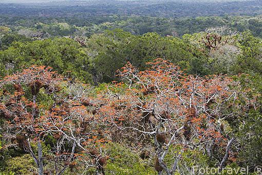 Vegetación tropical. Departamento de Peten. Guatemala. Centroamerica