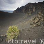 Paraje del volcan de Capelinhos. Surgio del mar en 1957. Isla de FAIAL. Azores. Portugal