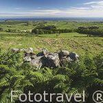 Paisaje ondulado con ganaderia y campos de cultivo, vista desde la Sierra de Cume. isla de TERCEIRA