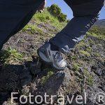 Montañista subiendo hacia el pico de la isla de PICO. (2351 metros,La montaña mas alta de Portugal. Isla de PICO