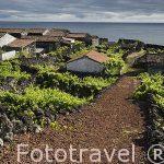Viñedos (Patrimonio de la Unesco) en la ladera de la montaña. Pueblo de Sao Mateos. Isla de PICO