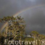 Arcoiris sobre los bosques de la isla de PICO.