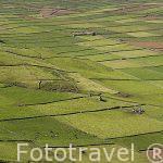 Paisaje de campos de cultivo y ganaderia desde la Sierra do Cume. Isla de TERCEIRA.