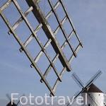 Molinos de viento en MOTA DEL CUERVO. Cuenca. Castilla La Mancha. España - Spain