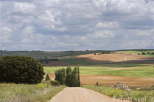 Paisajes y campos de cultivo cerca de LA ALBERCA DE ZANCARA. Cuenca. Castilla La Mancha. España - Spain