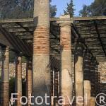 Columnas en el peristilo junto al teatro. MERIDA. Ciudad Patrimonio Unesco. Badajoz. Extremadura. España