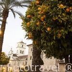 Naranjos en la Plaza de España. MERIDA. Ciudad Patrimonio de la Unesco. Badajoz. Extremadura. España