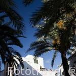 Palmeras y viviendas en el casco histórico de la ciudad de IBIZA. Islas Baleares. España