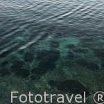 Campos de poseidonia, planta vascular, fanerogama. Junto a las costas de IBIZA. Islas Baleares. Mar Mediterraneo. España
