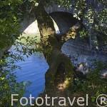 Puente de Cuartos, cerca de LOSAR DE VERA. Provincia de Caceres. Extremadura. España - Spain