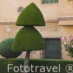 Jardines con setos en la población de LOSAR DE VERA. Provincia de Caceres. Extremadura. España - Spain