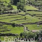 Campos de cultivo en terrazas cerca de GUIJO DE SANTA BARBARA. Provincia de Caceres. Extremadura. España - Spain