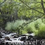 Charco las Tablas y rio. Conjunto Lago Tablas en Garganta de Pedro Chate. Provincia de Caceres. Extremadura. España - Spain