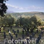 Cementerio a los soldados alemanes caidos en la I y II Guerra Mundial cerca de la población de CUACOS DE YUSTE. Provincia de Caceres. Extremadura. España - Spain