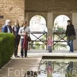 Un gato. Palacio del Partal y estanque. La Alhambra, UNESCO. Ciudad de GRANADA. Andalucia. España