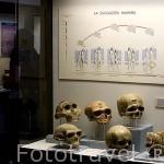 Museo Arqueológico y etnográfico. Ciudad de GRANADA. Andalucia. España