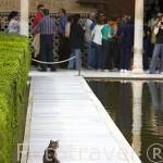 Un gato. Patio de Arrayanes. Palacio de Comares. La Alhambra,UNESCO. Ciudad de GRANADA. Andalucia. España