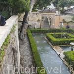 Jardines Altos del Palacio del Generalife. La Alhambra, UNESCO. Ciuda de GRANADA. Andalucia. España