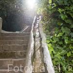 Escalera del Agua. Palacio del Generalife. La Alhambra, UNESCO. Ciuda de GRANADA. Andalucia. España
