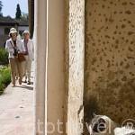 Gato en el patio de la Acequia. Palacio del Generalife. La Alhambra, UNESCO. Ciudad de GRANADA. Andalucia. España