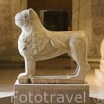 El leon recien restaurado del Patio de los Leones. Actualmente en exposición en el Museo de la Alhambra. Ciudad de GRANADA. Andalucia. España