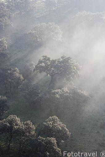 Bosque de vegetación autoctona en la sierra de Andujar. Jaen. Andalucia. España