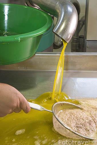 Aceite de oliva extra virgen antes de pasar filtrado. Almazara de aceite Galgon 99 SL. Termino de VILLANUEVA DE LA REINA. Jaen. Andalucia. España