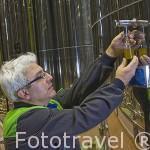 Operario obteniendo una pequeña muestra de aceite de oliva virgen para cata. Almazara de aceite Cooperativa Virgen del Carmen. Jaen. Andalucia. España