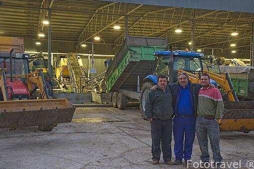 Agricultores esperando la descarga de sus aceitunas en la almazara de aceite Cooperativa Virgen del Carmen. TORREDONJIMENO. Jaen. Andalucia. España