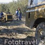 Vehiculo especial para barear los olivos atascado en el barro. Cerca de CASTAÑUELA. Jaen. Andalucia. España