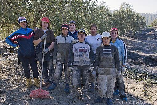Mujeres en una cuadrilla. Olivos de la variedad picual. Cerca de ESCAÑUELA. Jaen. Andalucia. España