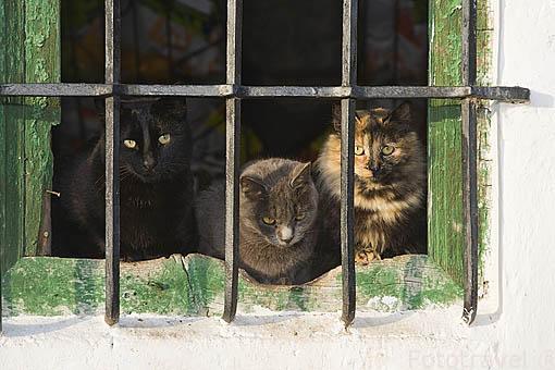 Gatos en una ventana. ANDUJAR. Jaen. Andalucia. España