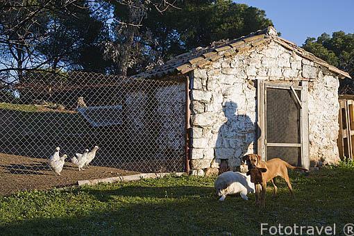 Gallinero. Casa rural Villa Matilde. Sierra de Andujar. Termino de ANDUJAR. Jaen. Andalucia. España