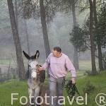 """Roland Wasserman, propietario de la casa rural Villa Matilde con su burro """"Jueves"""". A 18km, norte de ANDUJAR. Sierra Morena. Jaen. Andalucia. España MR.092"""