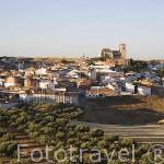 El pueblo de CAMPO REAL rodeado de olivos. Situado a aprox 40 kms de la capital, Madrid. Comunidad de Madrid. España