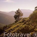 Vistas desde Peñalara. Parque Natural de Peñalara. Sierra de Guadarrama. Comunidad de Madrid. España