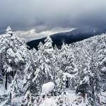 Paisaje de pinares nevado. Parque Natural de Peñalara. Sierra de Guadarrama. Comunidad de Madrid. España