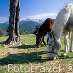 Caballos pastando cerca de 7 Picos. Sierra de Guadarrama. Comunidad de Madrid. España