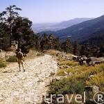La calzada romana. Valle de la Fuenfria. Sierra de Guadarrama. Comunidad de Madrid. España